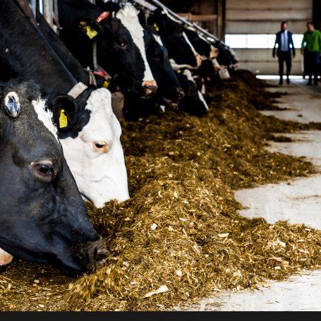 Belastingdienst geeft agrarisch ondernemers uitstel van betaling door droogte